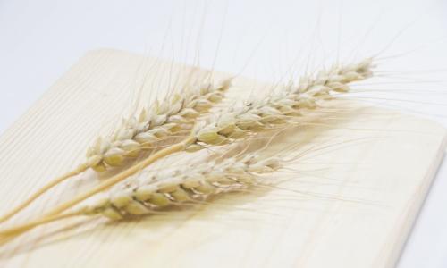 【ハンドケアコラム】 小麦中心の食生活で指が曲がる!?(2019/10/15 更新)